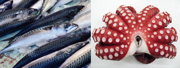 Introducing Our Business|Raw Seafood Materials|English